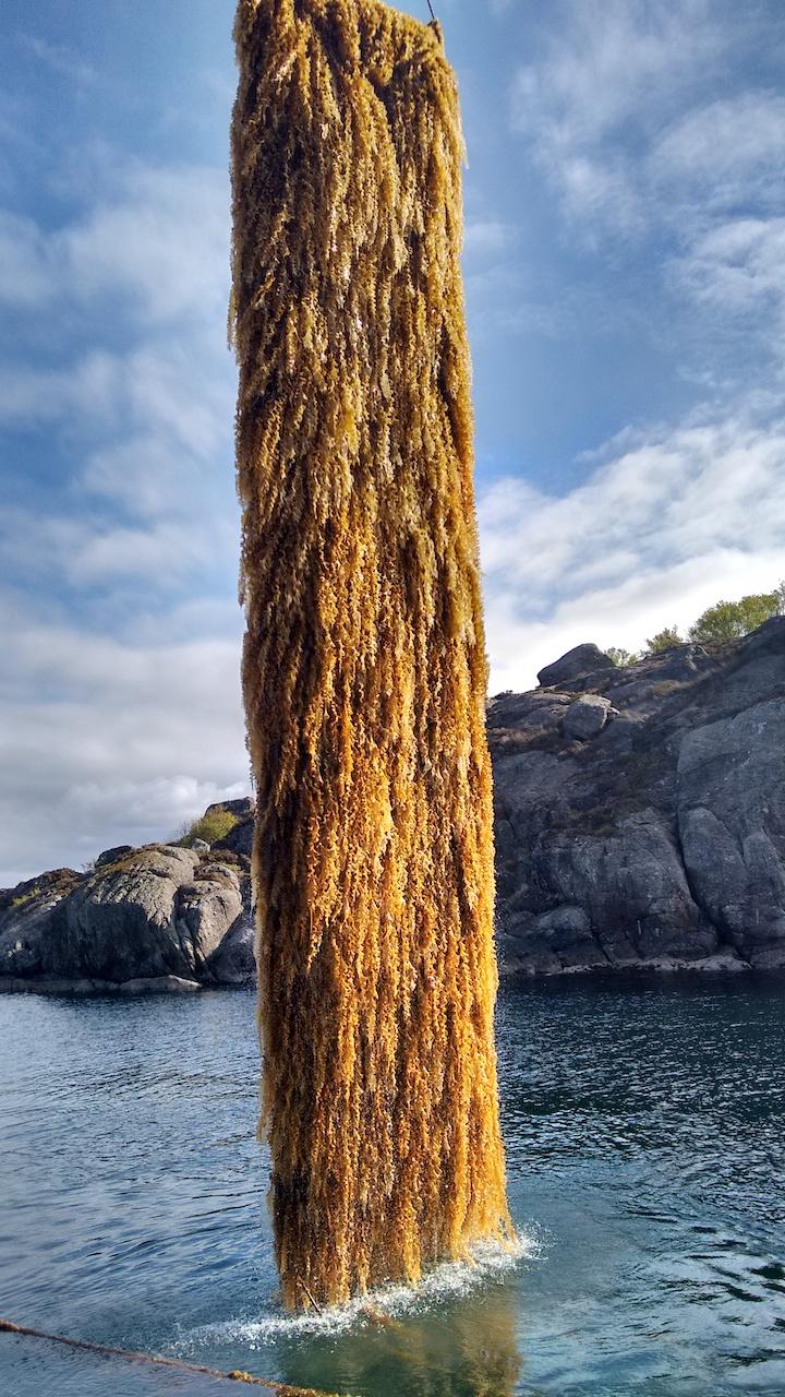Zeewier begroeid textieldoek van SIOEN (foto Guy Buyle)